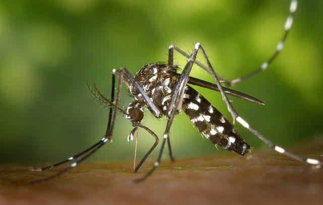 Insektenstiche sind unangenehm