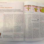 Akne inversa/ Hidradenitis suppurativa Dr. Kirschner Ärztliches Journal Dermatologie